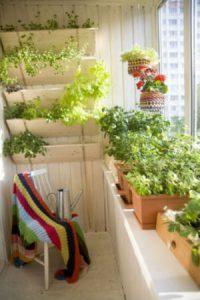 огород на балконе виды грядок