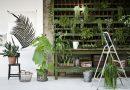 Неприхотливые комнатные растения – цветы, которые легко посадить и невозможно погубить
